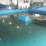 Рыборазводный завод (Рязановка)